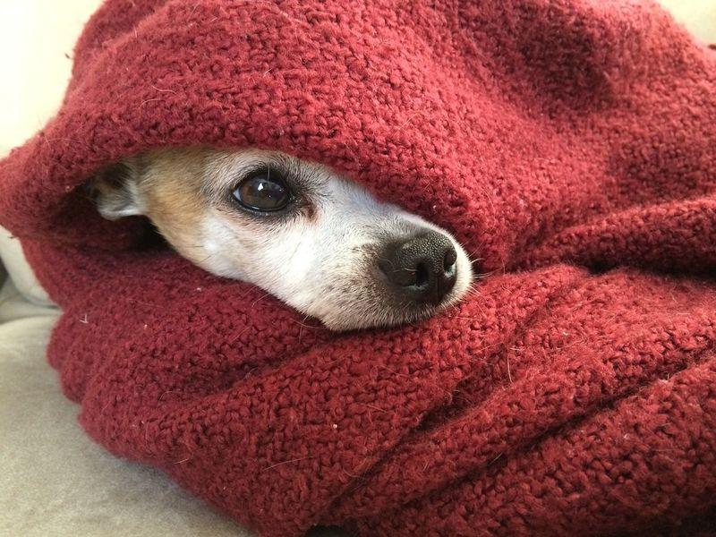 Singlereise mit hund